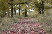 Geshtenjat-Parku Rinia